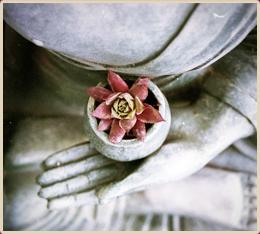 corsi-meditazione-amrita-roma